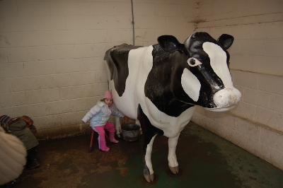 Milking the cow at Cannon Hall Kids Farm