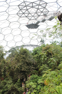 High platform in Eden Project Rainforest Biome