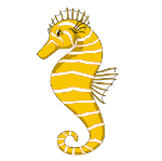 Picture to print for large underwater sea picture - seahorse