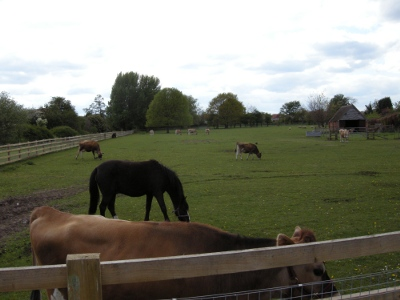 Cows and horses at Old Rectory Farm, Sheldon Country Park