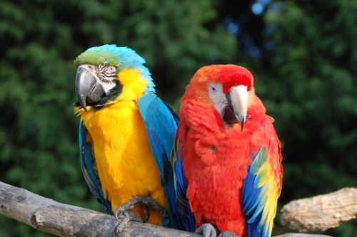 Parrots at Tropical Birdland Dresford Leicestershire