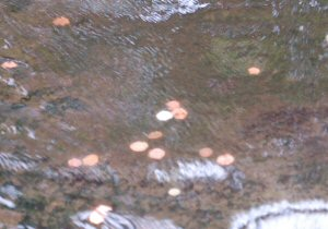 Coins thrown into the water where the ducks are at Tropical World Leeds