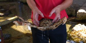 Weymouth Sea Life Centre, Handling a Crab